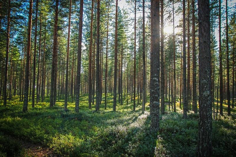 Dự án nông lâm nghiệp thuộc cụm dự án điện mặt trời Xuân Thiện Ea Súp